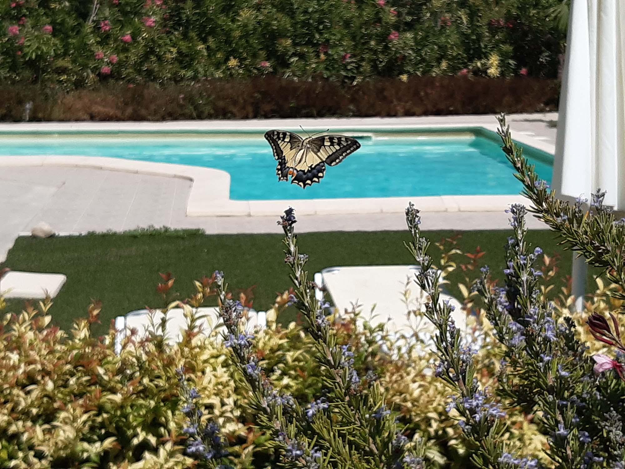 chania-crete-organic-farm-villa-green-orange-villa