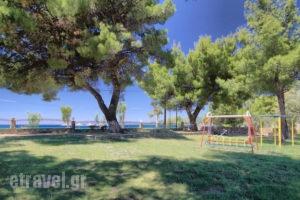 Angelos Karastergios Studios_best deals_Apartment_Macedonia_Halkidiki_Paradisos
