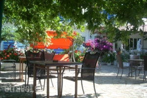 Angelena_accommodation_in_Hotel_Central Greece_Fokida_Spilia of Trizonia
