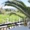 Digenis Studios_best deals_Apartment_Ionian Islands_Lefkada_Lefkada Rest Areas