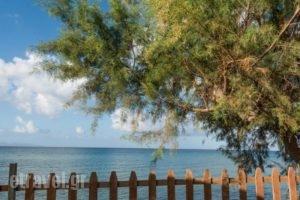 Calypso Studios_best deals_Hotel_Ionian Islands_Zakinthos_Zakinthos Rest Areas