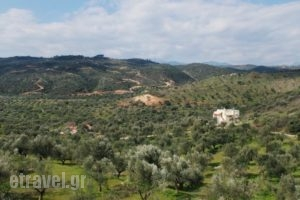 Elaionas Studios_lowest prices_in_Hotel_Peloponesse_Lakonia_Skoutari