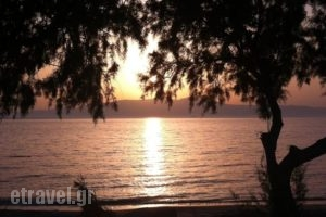 Akti Kastraki Areti Bungalows_travel_packages_in_Cyclades Islands_Naxos_Naxos Chora