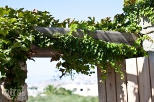 Paros Apartments_holidays_in_Apartment_Cyclades Islands_Paros_Paros Rest Areas