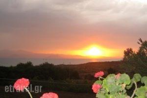 Aronis_holidays_in_Hotel_Cyclades Islands_Naxos_Naxos chora