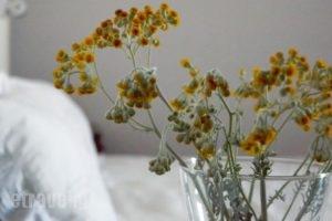Cyclades Rooms_holidays_in_Room_Cyclades Islands_Antiparos_Antiparos Chora