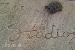 Zas Studios_accommodation_in_Hotel_Cyclades Islands_Naxos_Naxos chora