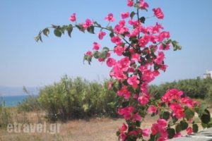 9 Muses Naxos_best prices_in_Hotel_Cyclades Islands_Naxos_Naxos chora
