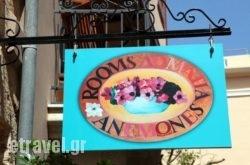 Anemones Rooms