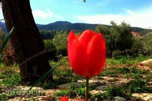 Evridiki_lowest prices_in_Hotel_Macedonia_Imathia_Vergina