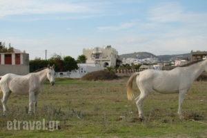 Marc Aggelos - Meteora Studios_accommodation_in_Apartment_Cyclades Islands_Sandorini_Perissa