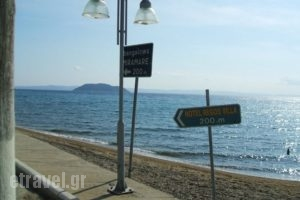 Regos_best prices_in_Apartment_Macedonia_Halkidiki_Paradisos