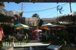 Dolphin Beach Bar   hollidays